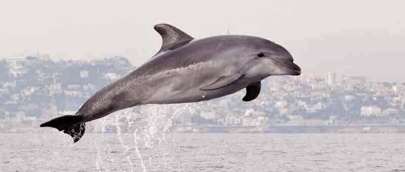 Ou voir des dauphins à Marseille ?