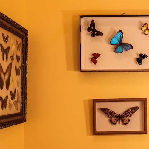 cadre avec des papillons qui décore la salle de bains de la chambre sugiton